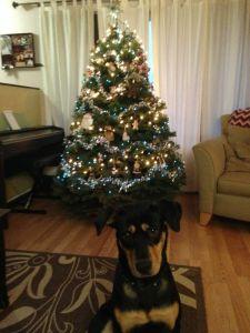 Mickey and the Christmas tree