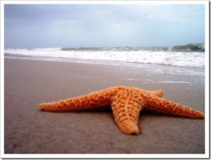 starfish-beach